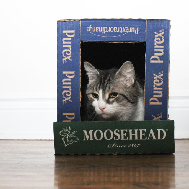 cat-in-a-box-house-4