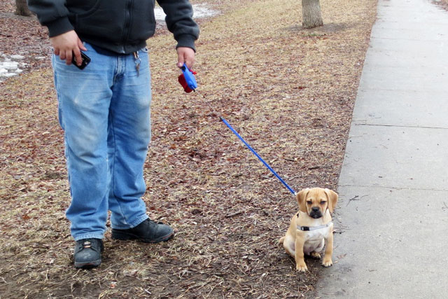puggle-pup-3-months-old-06
