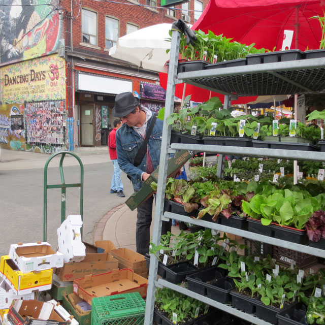 getting-herb-plants-in-kensington-market-02