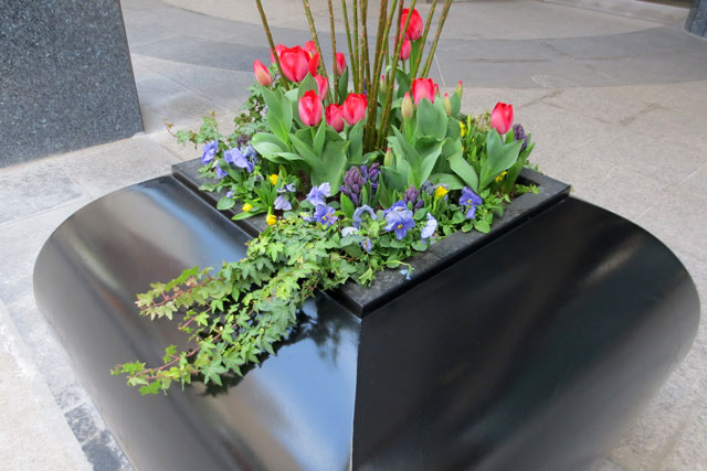 spring-flowers-in-the-city