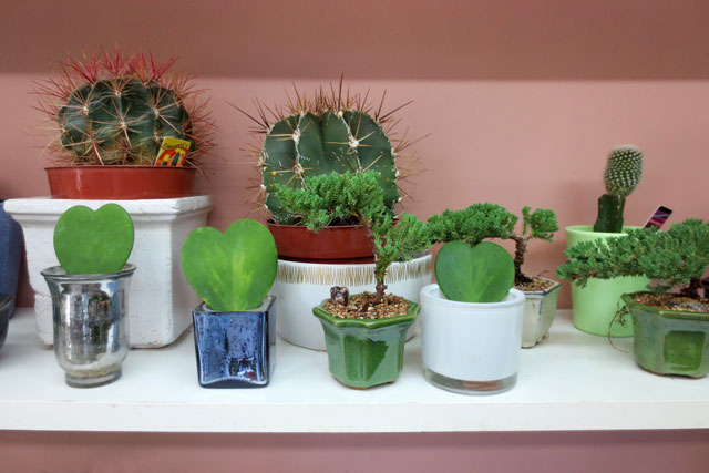 cacti-and-bonsai-at-shaw-flowers-and-gifts-toronto