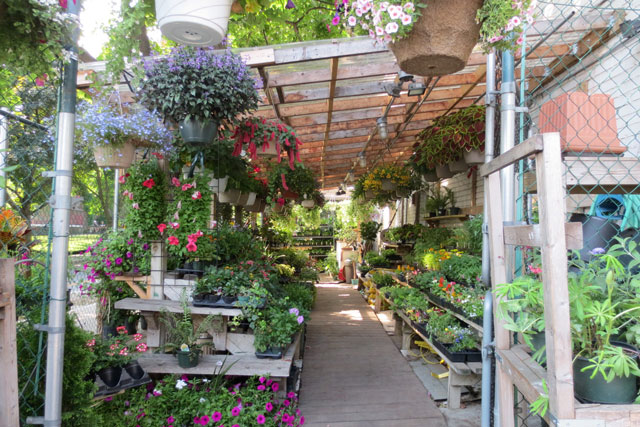 shaw-flowers-and-gifts-toronto-outdoor-plants