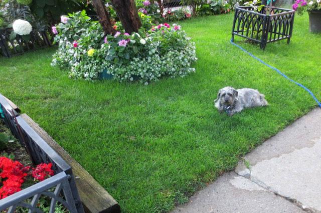 dog-in-his-yard