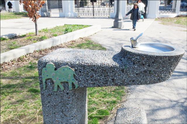 elephant-on-drinking-founta