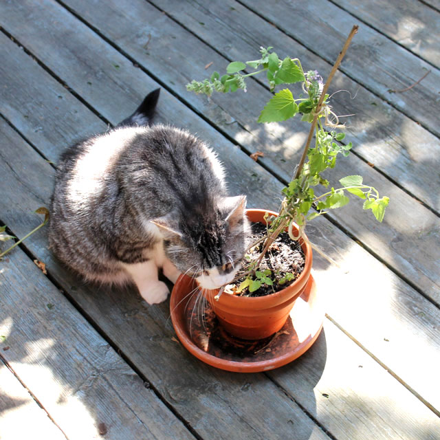 eddie-and-plant