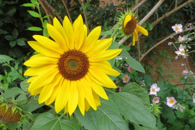 happy-flower