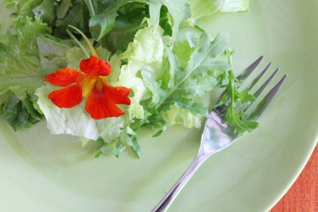 plate-of-salad-with-nasturtium-flower-03