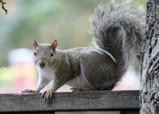squirrel-friend-01