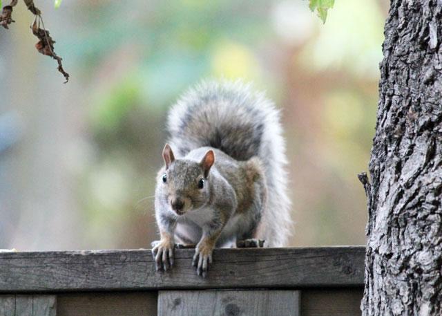 squirrel-friend-04