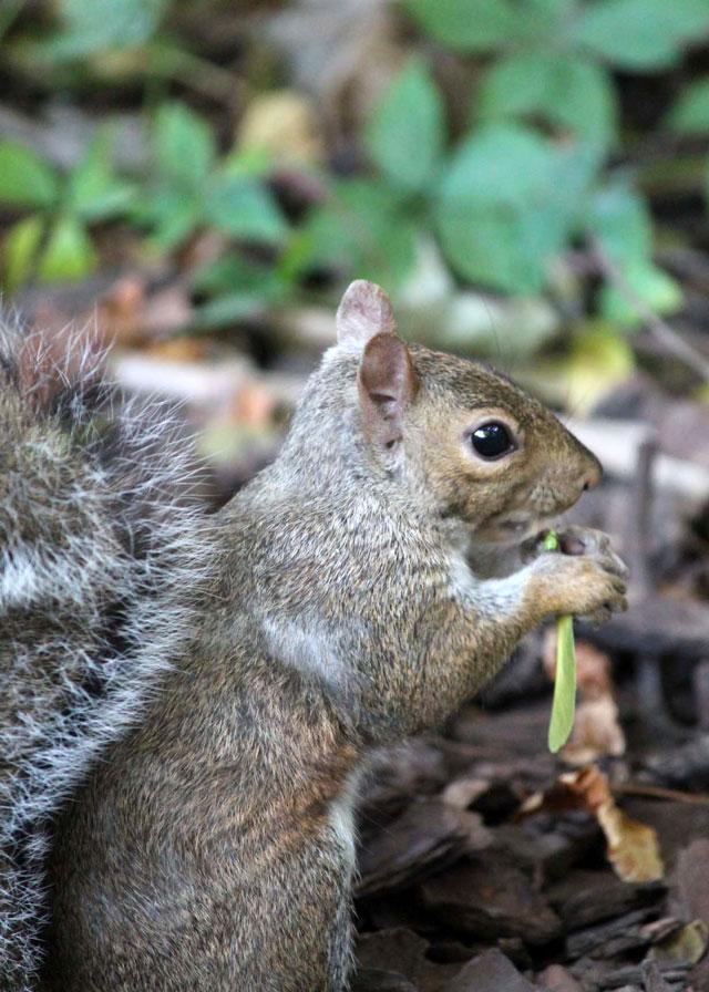 squirrel-friend-11