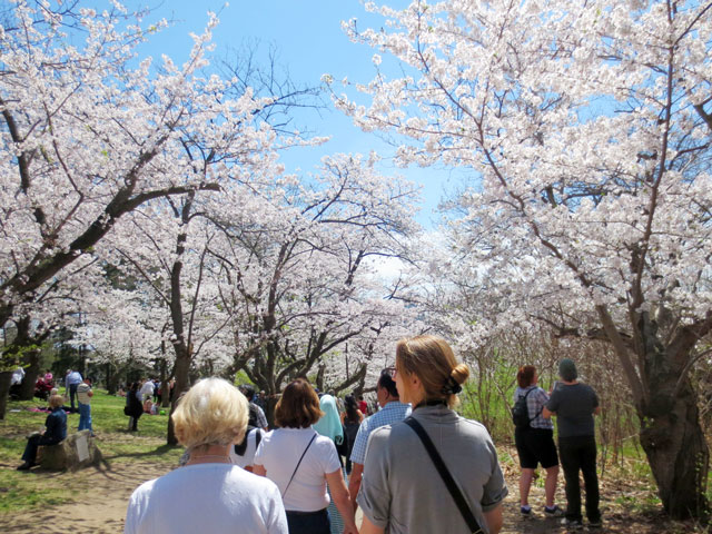 crowds-in-high-park-looking-at-cherry-blossoms-may-2015
