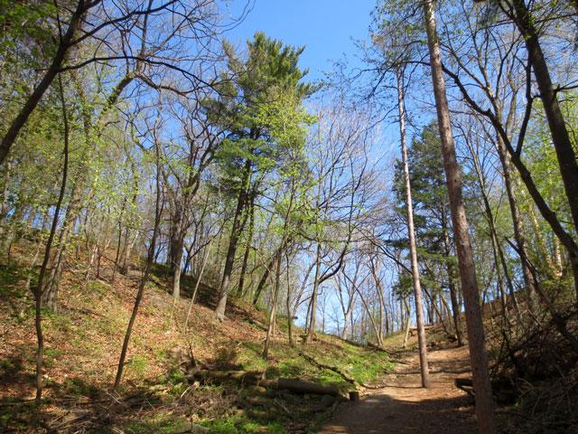 high-park-toronto-natural-growth