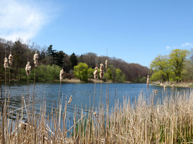 on-the-bank-of-grenadier-pond-in-high-park