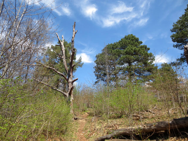 wild-growth-high-park-toronto