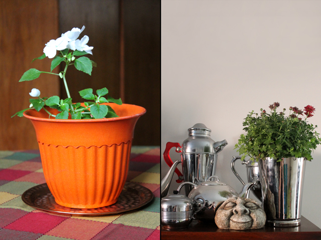 autumn-decor-plants