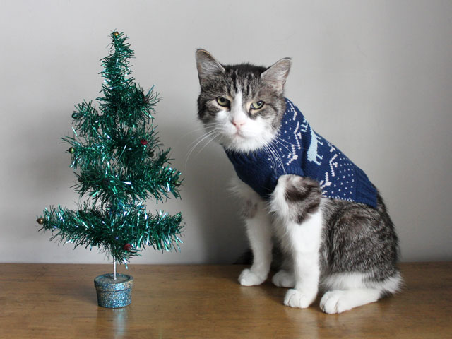 cat-in-a-sweater-with-a-christmas-tree