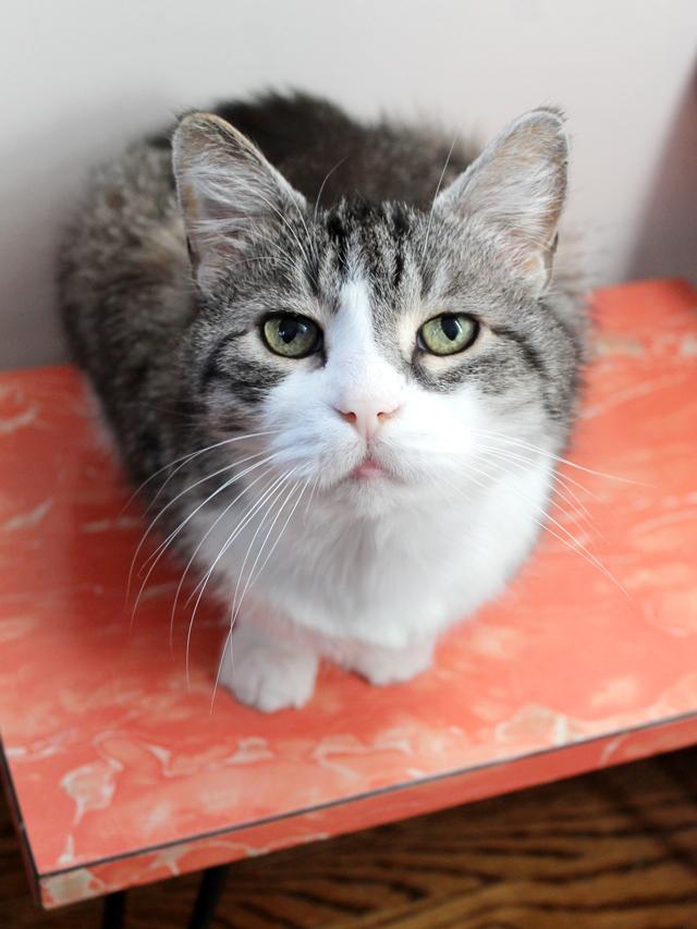 eddie-the-cat