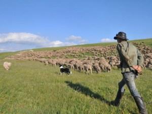 bergers-francais-plus-betes-monde