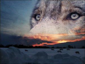 esprit-du-loup