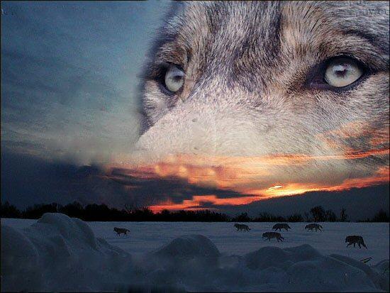 esprit-loup