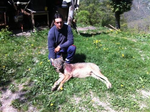 Jean-Michel Citron, berger à Peïra Cava (06440), tueur de loup