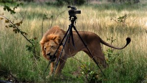 bidonnage-documentaires-animaliers