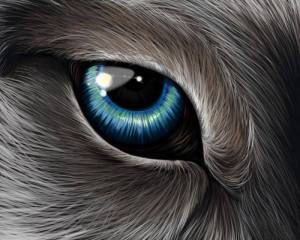 loup-ancetre-chien-recherche-evolue