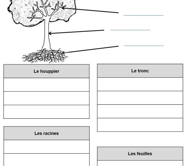 Exercices feuille et arbre