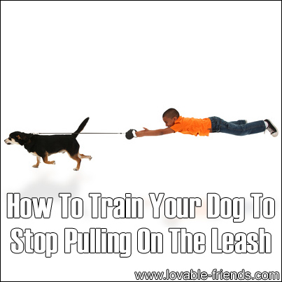 Best Dog Collars Leashes And Harnesses, Best, Free Engine