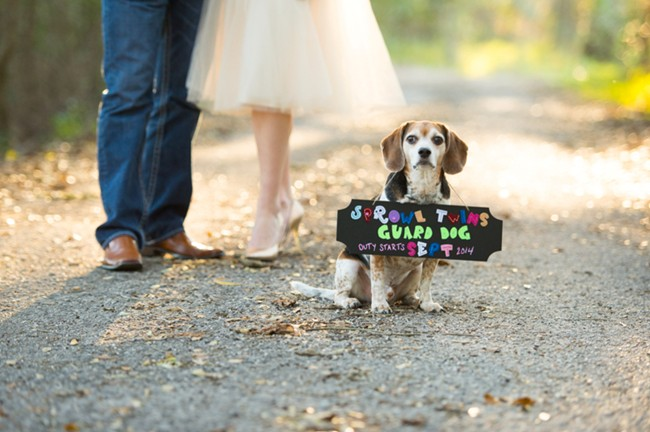 Announcing A Pregnancy Photo Shoot With Cute Dog