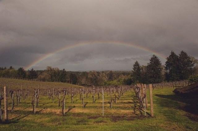 Grey sky with rainbow over a vineyard