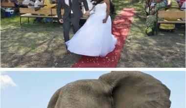 These wedding photos top all wedding photos ever taken..