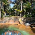 Bahia Resort Hotel - Gracie the Seal