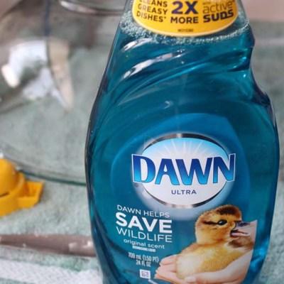 Simplify your summer with Dawn #MyDawnSummer #DDDivas @Dawndish