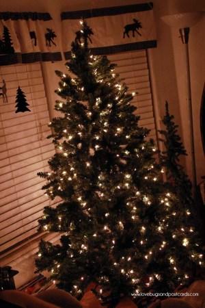 Christmas Tree from Christmas Tree Market