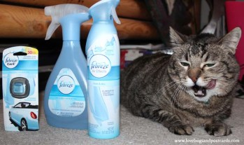 Febreze Products help eliminate pet odors