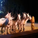 Cavalia Odysseo in Salt Lake City, Utah