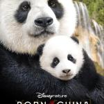 Disneynature's Born In China review #BornInChina