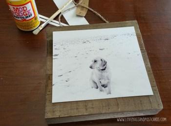 DIY Pet Photo Board