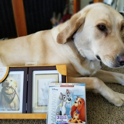 Disney's Lady and the Tramp inspired Dog Paw Print Preservation
