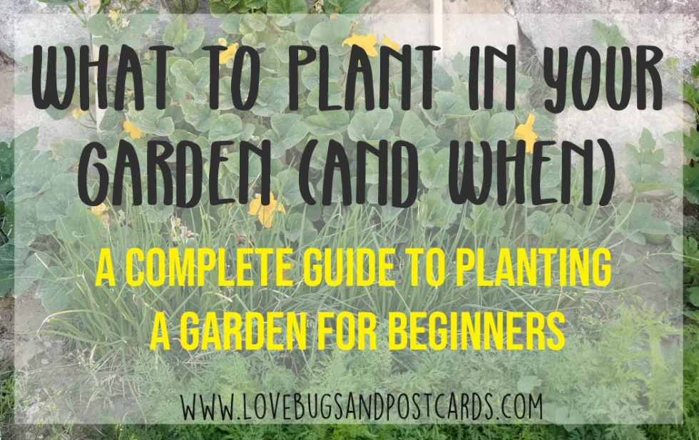 What to Plant in your garden (and when)