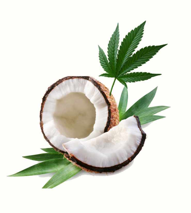 Cannabis and coconut oil image