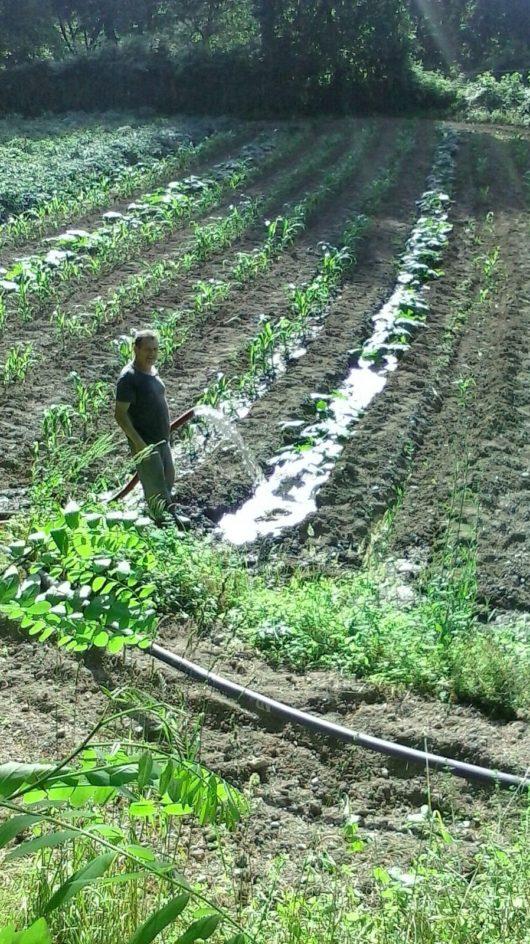 papà-agricoltore-contadino-calabria (17)