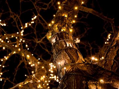 christmas lights miami # 31