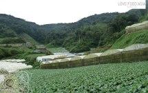 Veggie Farms around Tanah Rata