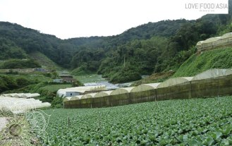 Veggie Farms around Tanah Rata