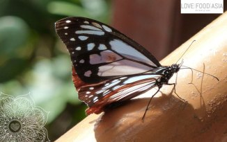 Ein Schmetterling in den Cameron Highlands