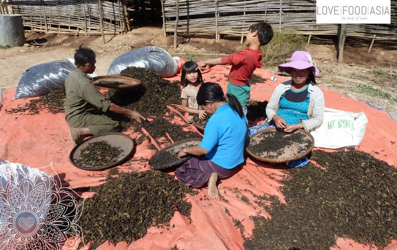 Eine Familie sortiert Teeblätter