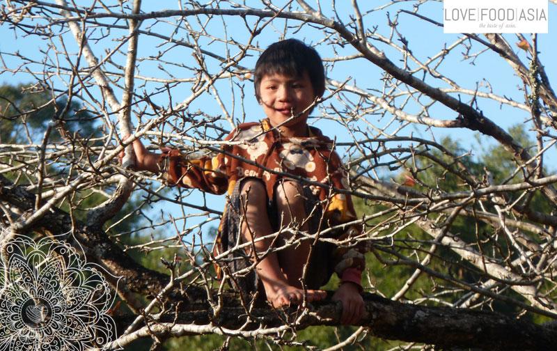 Little nasty boy in a tree