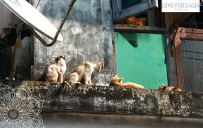 Cats in Yangon